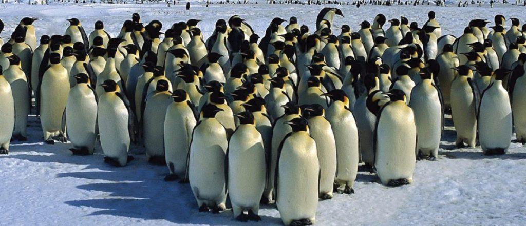 Penguin Colony in Antarctica