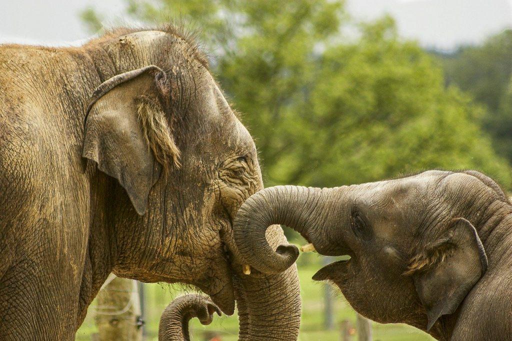 baby elephant, close up, elephants