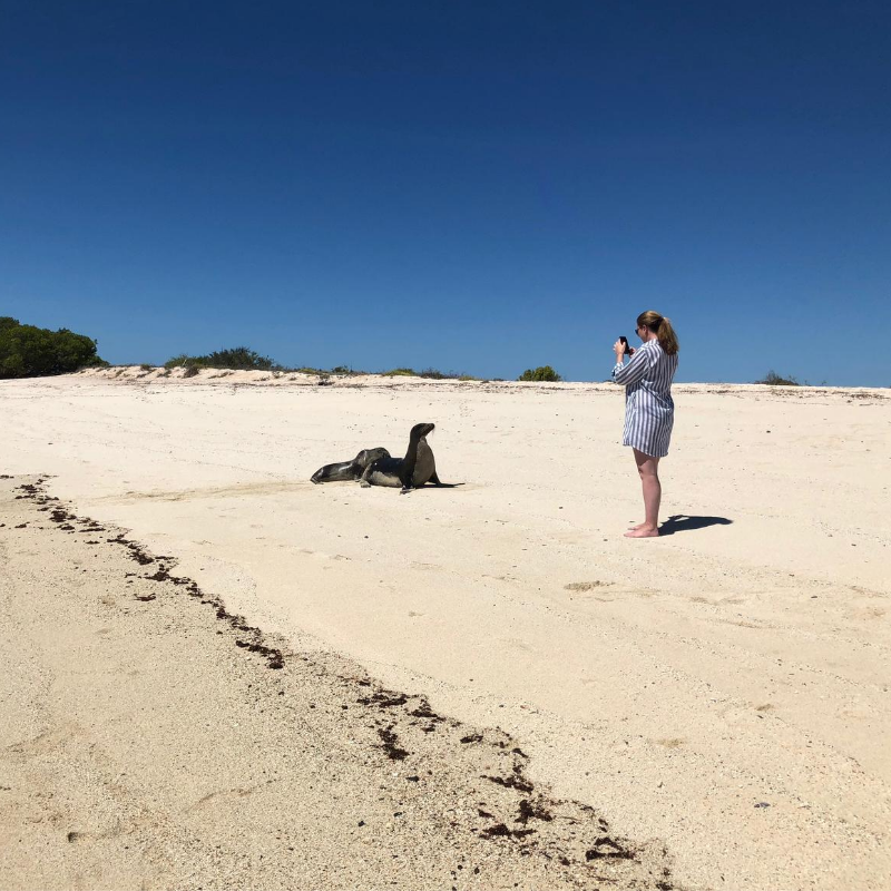 galapagos beach with sea lion