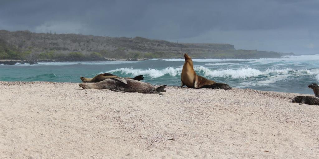 galapagos seals on a beach