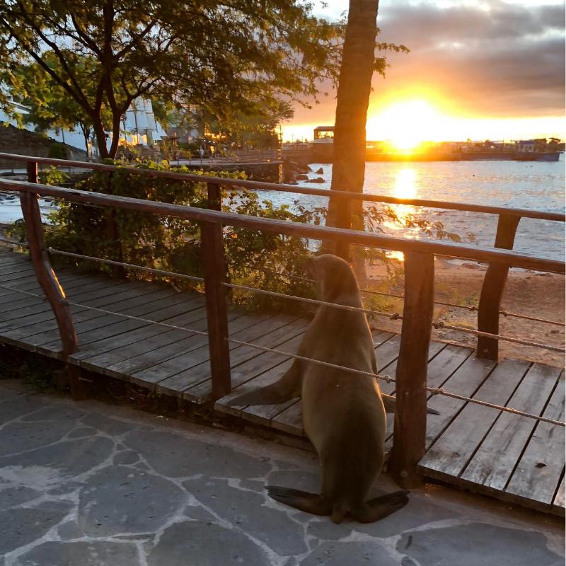 Galapagos sun set with sea lion