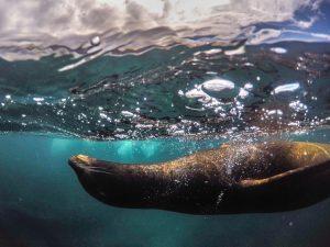 galapagos islands family travel