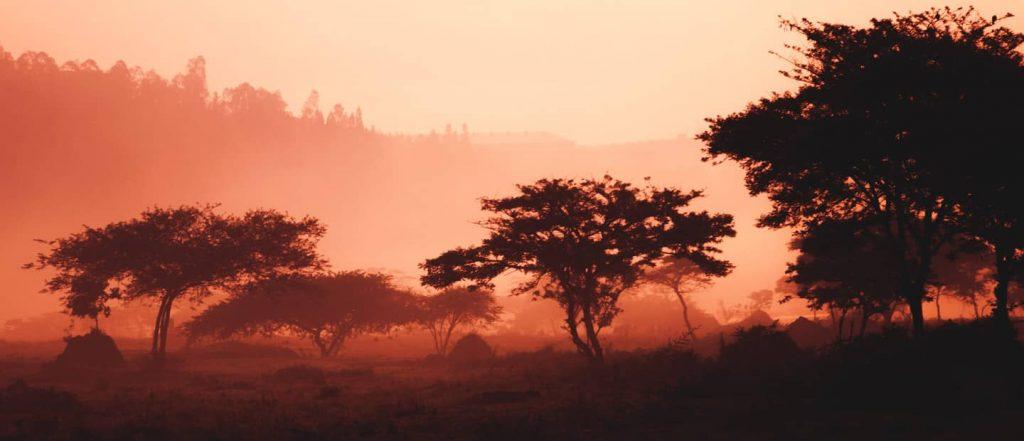 Rwandan Trees