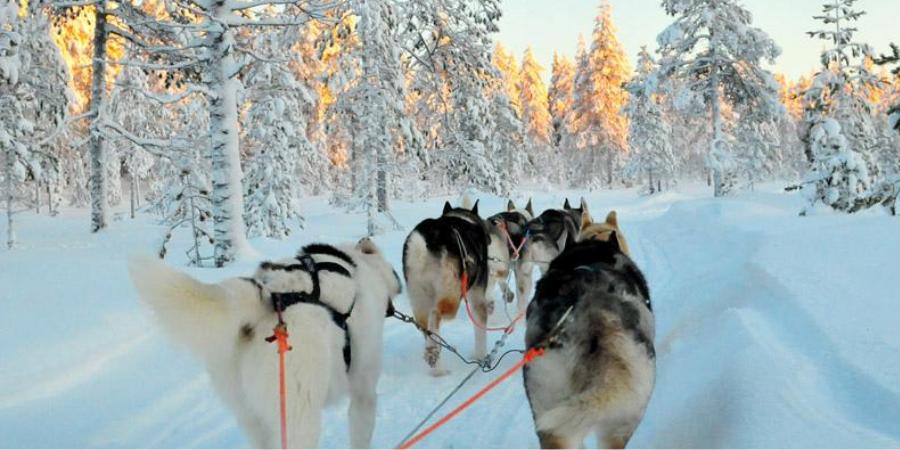 Husky Ride in Arctic