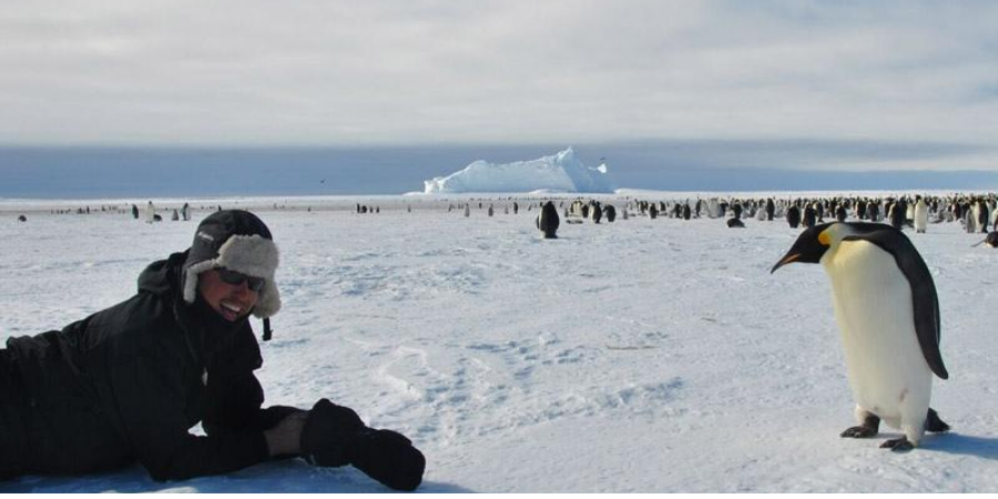 King Penguin colony in Antarctica