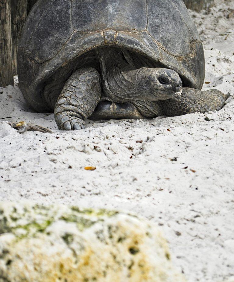 galapagos-tortoises-4068937_1920
